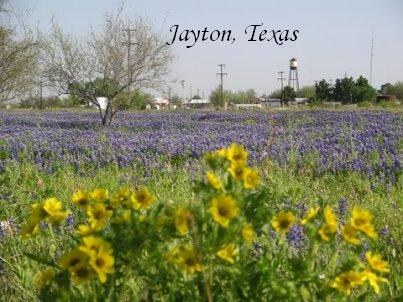 Jayton Texas Flowers